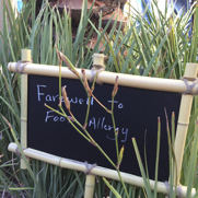 Farewell to Food Allergy, DailyForage.com