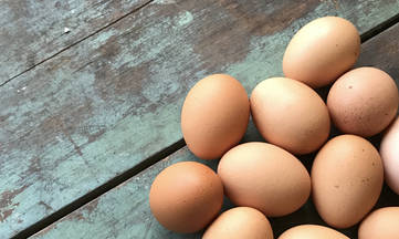 Eggs are Not Dairy by DailyForage.com