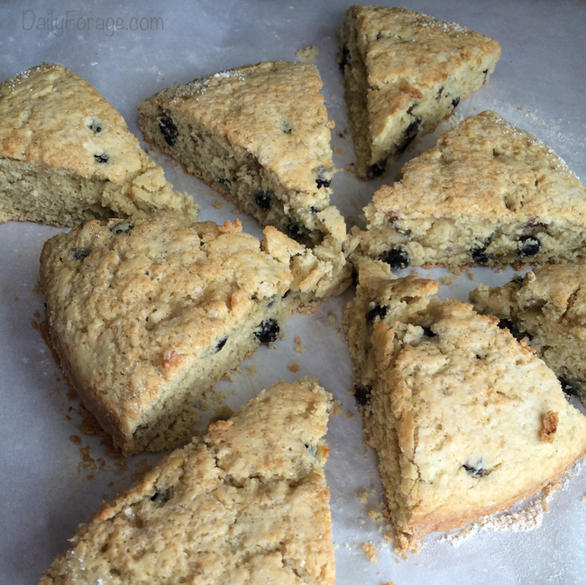 Gluten Dairy Free Blueberry Vanilla Cream Scones, DailyForage.com