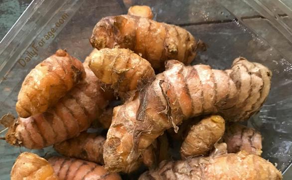 Fresh Raw Whole Turmeric by DailyForage.com